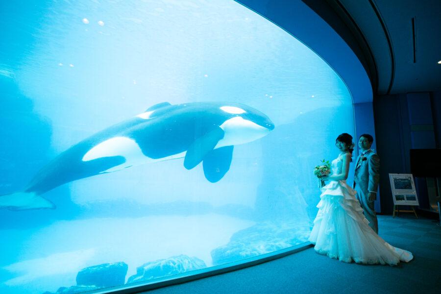 名古屋港水族館(シャチ)