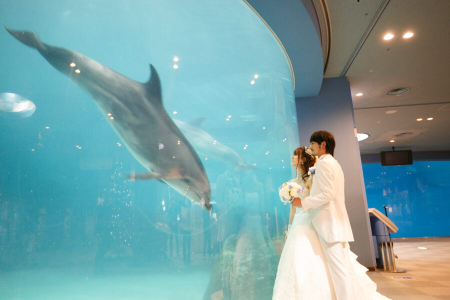 名古屋港水族館(イルカ)