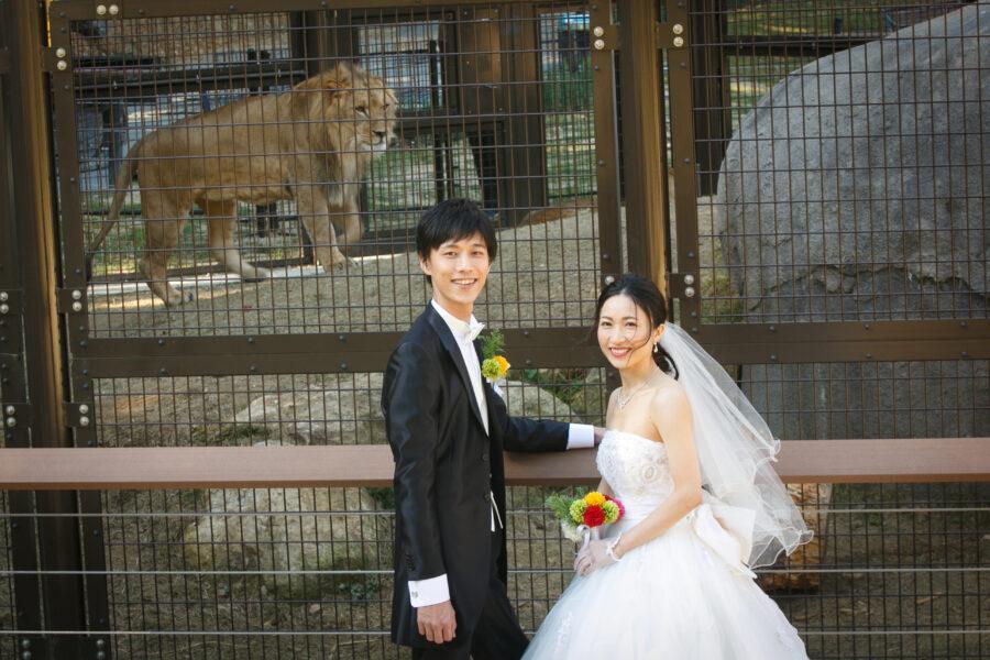 のんほいパーク(ライオン)